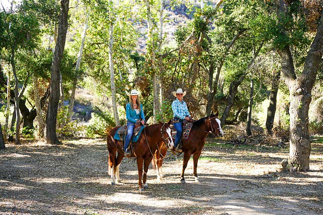 Ortega Mountain Horses
